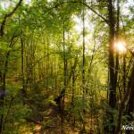Forest around Skakavac waterfall